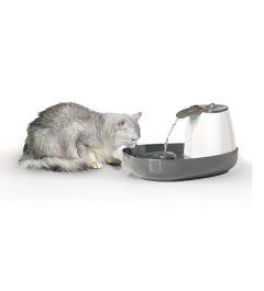 0330 Cascade + cat